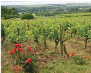 Domaine aux Moines vineyard