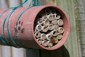 7 cm bee nest with red mason bee