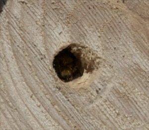Bee crawling into hole