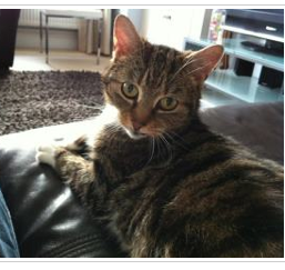 Florence, a 12 year old cat, fostered by Laura