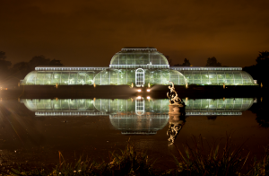 The Palm House Illuminated