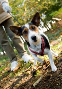 Dog and owner enjoying Alice Holt Forest, Surrey